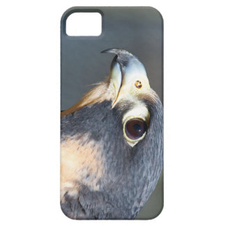 Peregrine Falcon in Profile Case For The iPhone 5