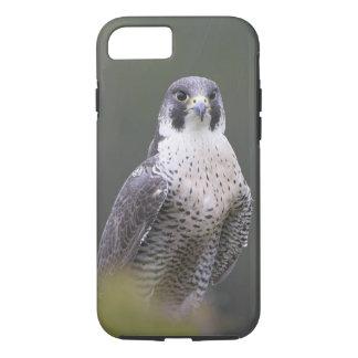 Peregrine Falcon iPhone case