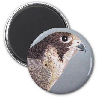 Peregrine Falcon Magnet Fridge Magnet