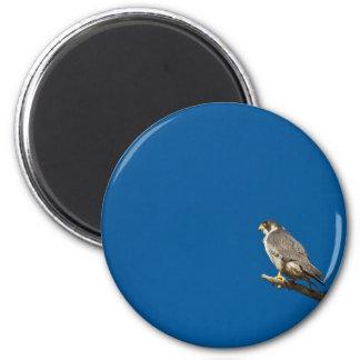 Peregrine Falcon 6 Cm Round Magnet