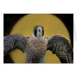 Peregrine Falcon Moon Rising