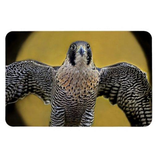 Peregrine Falcon Moon Rising Rectangular Magnets