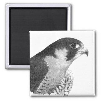 Peregrine Falcon-Pencil Square Magnet
