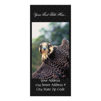 Peregrine Falcon Personalized Rack Card