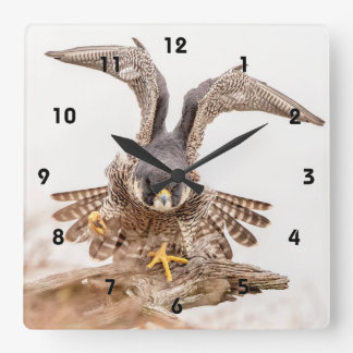 Peregrine Falcon Square Wall Clock