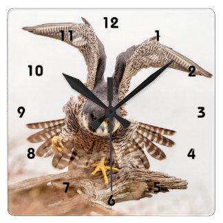 Peregrine Falcon Wall Clocks