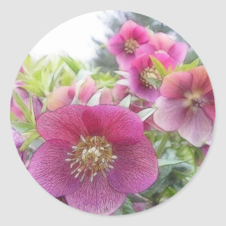 Perennial Plants - Purple Hellebore Classic Round Sticker
