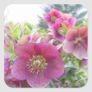 Perennial Plants - Purple Hellebore Square Sticker