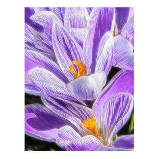 Perennial Purple Striped Crocuses Postcard