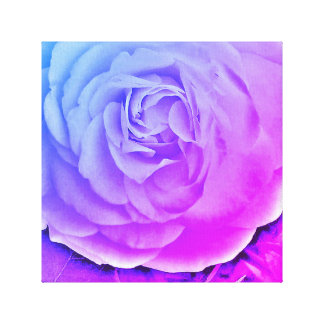 Perfect Blooming Rose Canvas Print
