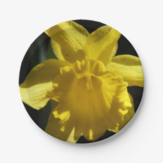 Perfect Daffodil Paper Plate