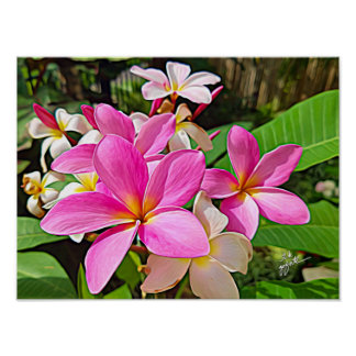 Perfect Pink Plumeria Poster