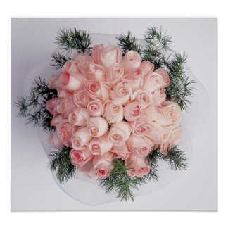 Perfect Pink Roses Posters and Prints