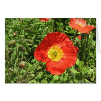 Perfect Poppies Card