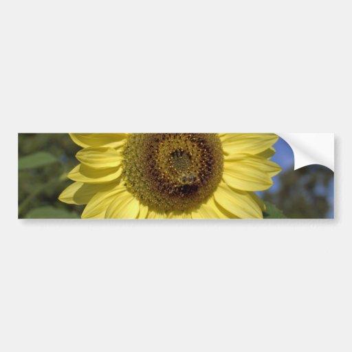 Perfect summer sunflower in blue sky. bumper sticker