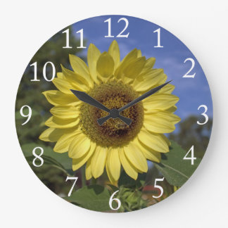 Perfect summer sunflower in blue sky. large clock