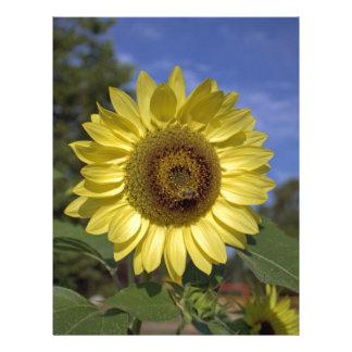 Perfect summer yellow sunflower in blue sky flyer design