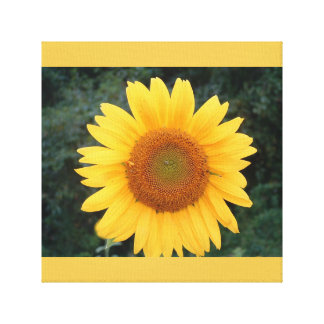 Perfect sunflower..... stretched canvas prints