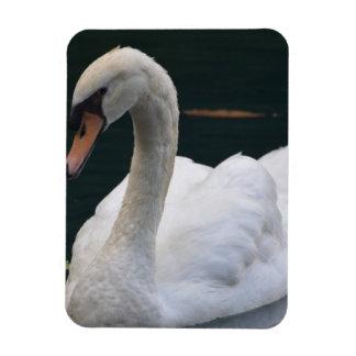 Perfect Swan Magnet