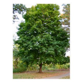 Perfect Tree Postcard