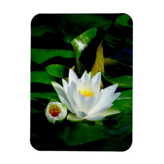 Perfect White Water Lily and Bud Magnet