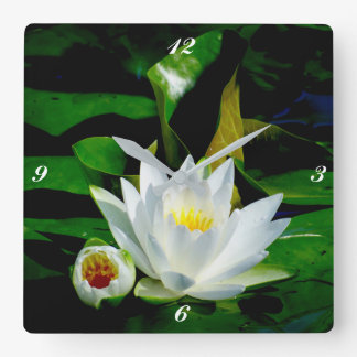 Perfect White Water Lily and Bud Square Wall Clock