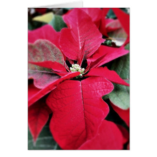 Perfectly on Point Poinsettia Holiday Card