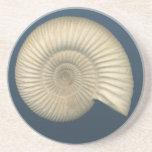 Perisphinctes Ammonite fossil