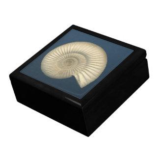 Perisphinctes Ammonite Large Square Gift Box