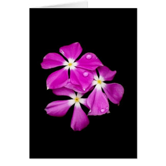 'Periwinkle Flowers After Rainfall' Blank Card