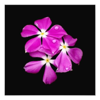 'Periwinkle Flowers After Rainfall' Photo Print