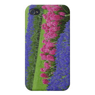 Pern of Grape Hyacinth, tulips, and iPhone 4 Cover