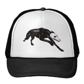 PERRO TURECO CAP