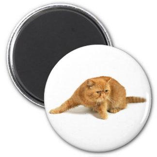 Persian cat 6 cm round magnet