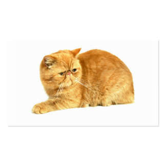 Persian cat pack of standard business cards