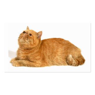 Persian cat business card templates