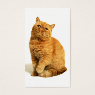 Persian cat business card