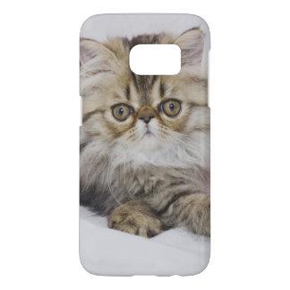 Persian Cat, Felis catus, Brown Tabby, Kitten