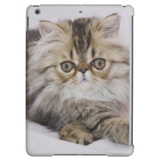 Persian Cat, Felis catus, Brown Tabby, Kitten,