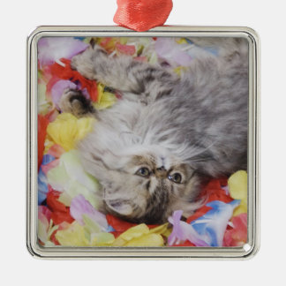 Persian Cat, Felis catus, Brown Tabby, Kitten, 2 Christmas Ornament