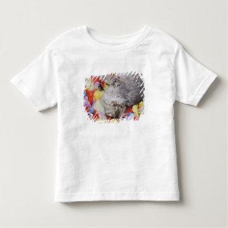 Persian Cat, Felis catus, Brown Tabby, Kitten, 2 Toddler T-Shirt