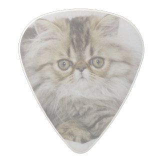 Persian Cat, Felis catus, Brown Tabby, Kitten, Acetal Guitar Pick