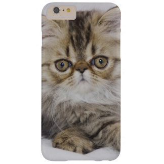 Persian Cat, Felis catus, Brown Tabby, Kitten, Barely There iPhone 6 Plus Case