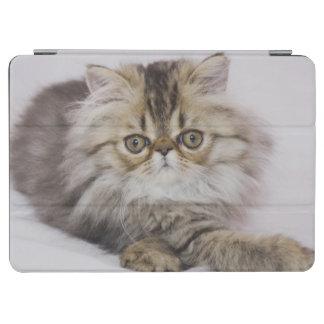 Persian Cat, Felis catus, Brown Tabby, Kitten, iPad Air Cover