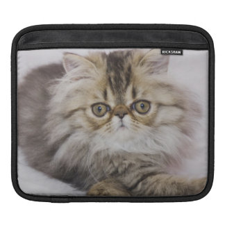 Persian Cat, Felis catus, Brown Tabby, Kitten, iPad Sleeve