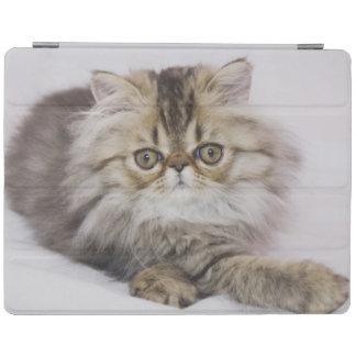 Persian Cat, Felis catus, Brown Tabby, Kitten, iPad Smart Cover