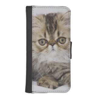 Persian Cat, Felis catus, Brown Tabby, Kitten, iPhone SE/5/5s Wallet Case