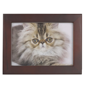Persian Cat, Felis catus, Brown Tabby, Kitten, Keepsake Box