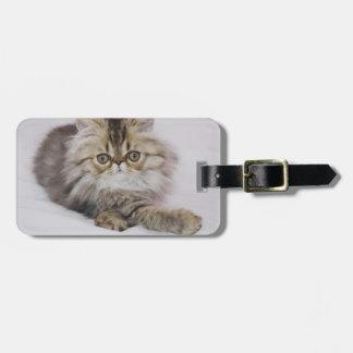 Persian Cat, Felis catus, Brown Tabby, Kitten, Luggage Tag