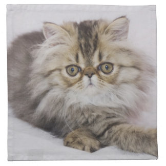 Persian Cat, Felis catus, Brown Tabby, Kitten, Napkin